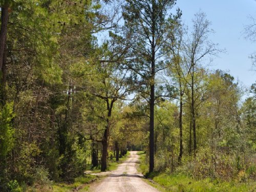 19 Acres Jordy Rd. : Huntsville : Walker County : Texas