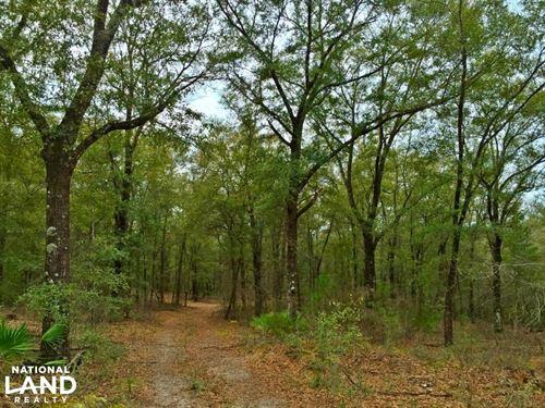 Walker Lane Longleaf Hardwood Tract : Chunchula : Mobile County : Alabama