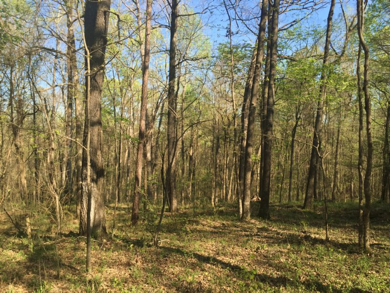 15± Acres - Colaparchee Rd : Macon : Bibb County : Georgia
