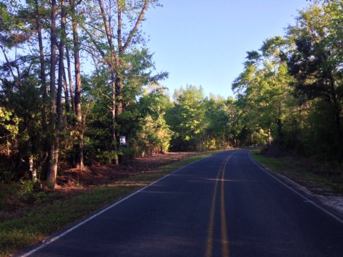 Mulberry Road 43 Tract : St. George : Dorchester County : South Carolina
