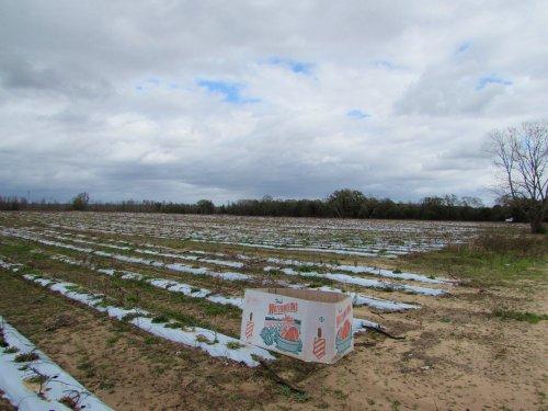 377.58 Acres Of Farmland : Marianna : Jackson County : Florida