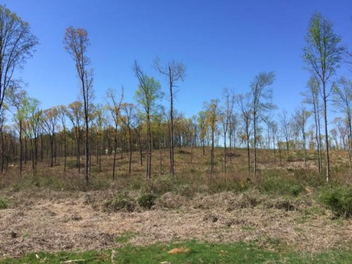 12+/- Wooded Acres, Adairsville : Adairsville : Bartow County : Georgia