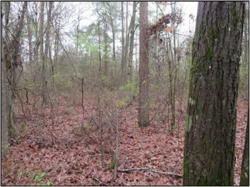 29 Acres In Scott County : Morton : Scott County : Mississippi