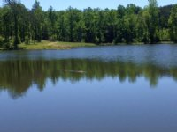 Indian Hills Farm 342acres : Saco : Pike County : Alabama