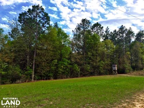 The Arden Road Chunchula Tract : Chunchula : Mobile County : Alabama