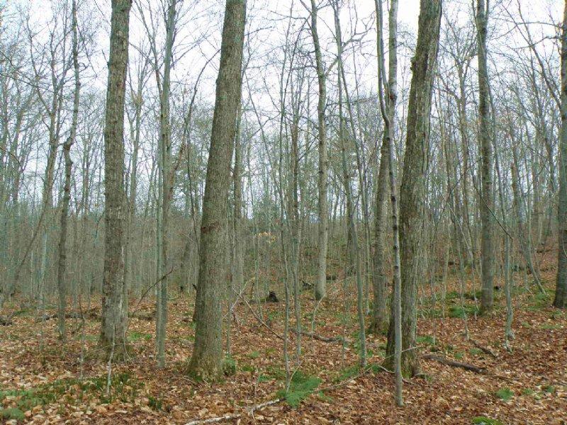 Elmore Pond Forest : Lake Elmore : Lamoille County : Vermont