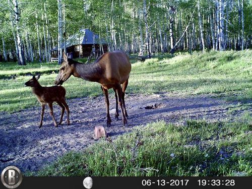 Hay Camp Mesa Ranch : Dolores : Montezuma County : Colorado