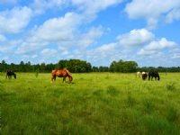 Bar-c Ranch