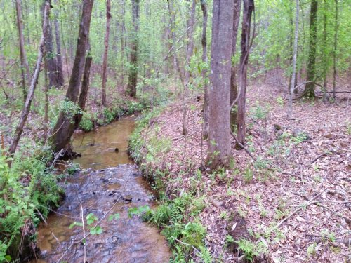 Wooded Land With Stream : Goodwater : Coosa County : Alabama
