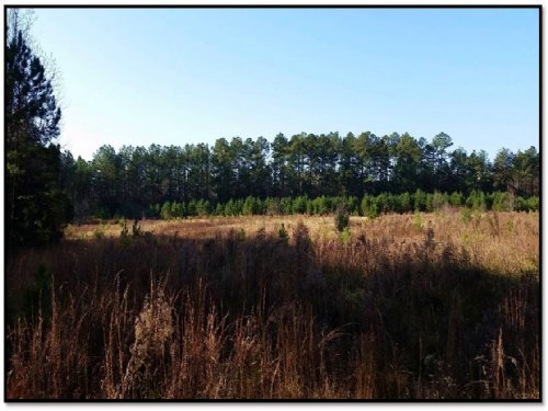 Hogskin Creek Tract : Donalds : Abbeville County : South Carolina
