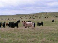 B R Ranch
