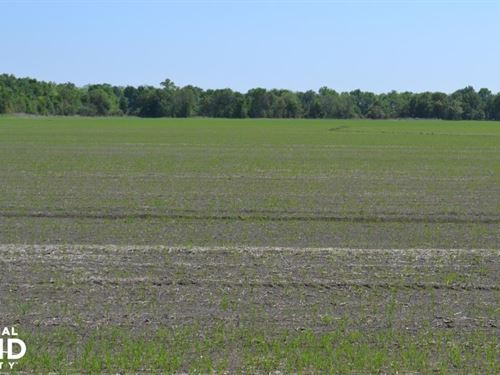 70 Acres Row Crop And Duck Hunting : Wabbaseka : Jefferson County : Arkansas