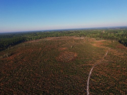 213 Versatile Acres In Screven Ga : Screven : Wayne County : Georgia