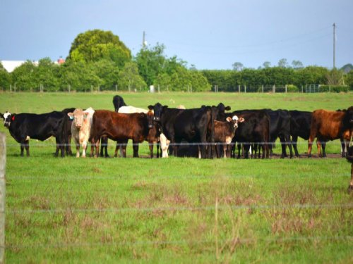 Hollandtown Road Ranch : Wauchula : Hardee County : Florida