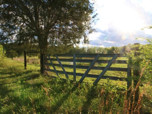41 Acres - Pond - Pasture - Creek : Ashville : St. Clair County : Alabama