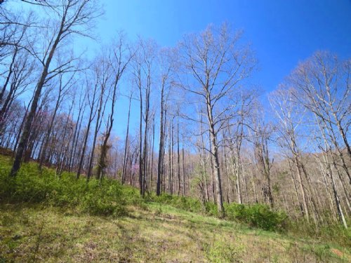Parkinson Rd - 102 Acres : Middleport : Meigs County : Ohio