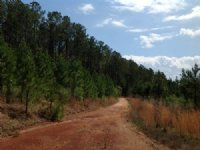 816+/- Ac Near Maplesville : Maplesville : Chilton County : Alabama