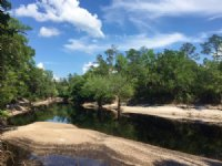 Suwannee River Land : Jasper : Hamilton County : Florida