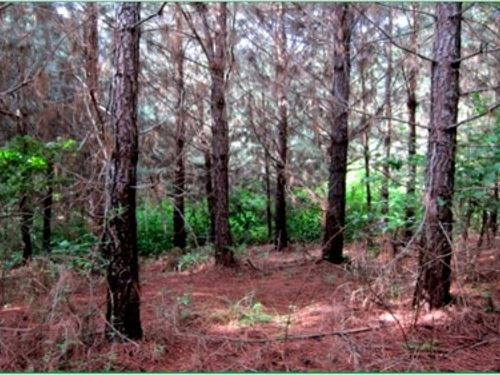 47 Acres In Attala County In Sallis : Sallis : Attala County : Mississippi
