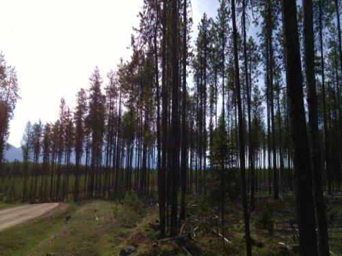Elk Creek Preserve Lot 3 : Condon : Missoula County : Montana