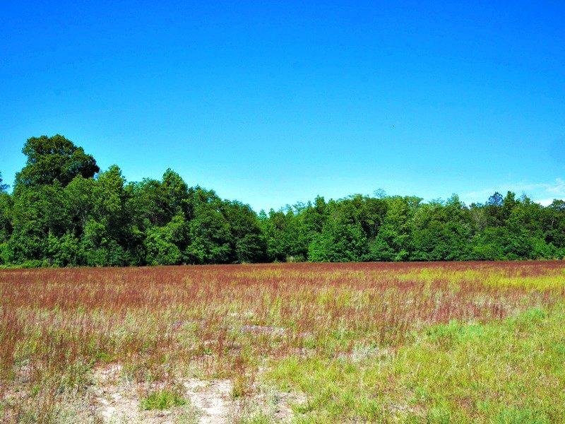 Lc Farm : Statesboro : Bulloch County : Georgia