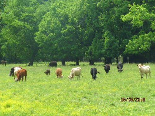 Creek-side Cattle Farm : Sylacauga : Talladega County : Alabama
