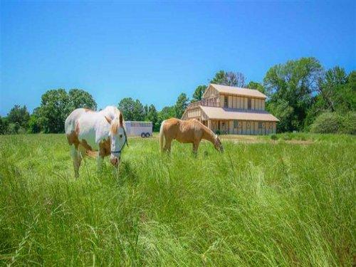 Executive Ranch / 30412 : Daingerfield : Morris County : Texas