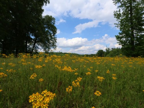 Wolf Creek Farms - 48+/- Acres : Pell City : Saint Clair County : Alabama