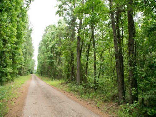 118 Ac Off Us Hwy 190 : Oakhurst : San Jacinto County : Texas
