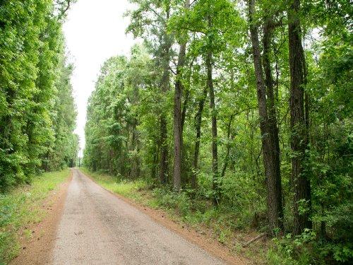 118 Ac Off Us Hwy 190 : Oakhurst : San Jacinto County : Texas
