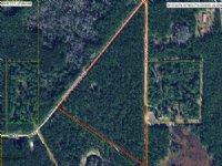 21.75 Acres In Planted Pine : Cedar Key : Levy County : Florida