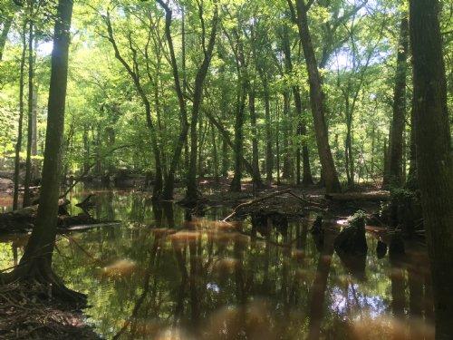 Gum Swamp 438 Ac Hunting Retreat : Eastman : Dodge County : Georgia