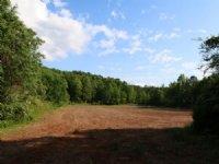 83+/- Acres Farm & Hunting Land : Sycamore : Talladega County : Alabama