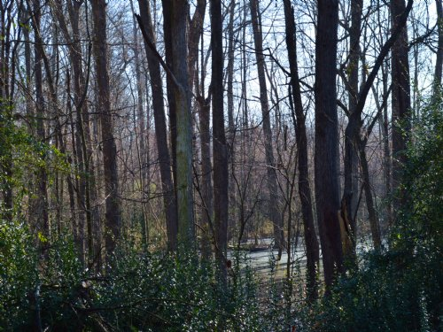 300 Plus Acres : Polkton : Anson County : North Carolina
