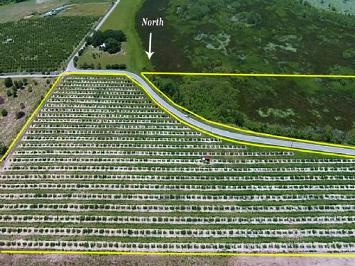 20± Acre Future Homesite / Grove : Haines City : Polk County : Florida