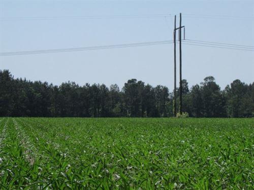 Briggs Schooner Trail Tract : Summerton : Clarendon County : South Carolina
