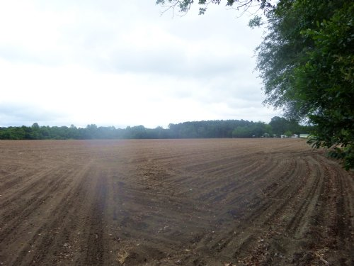 31 Acres Offers Many Possibilities : Odum : Wayne County : Georgia