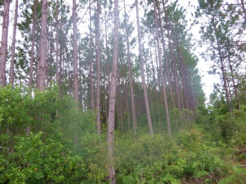 21 Acres Of Woodland On Three C Rd : Odum : Wayne County : Georgia