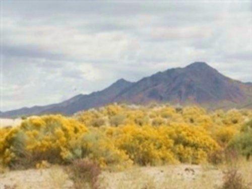 40 Acres Near Winnemucca : Golconda : Humboldt County : Nevada