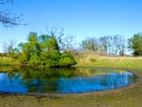 5 Acre Saddlebrook Ranch, Pond