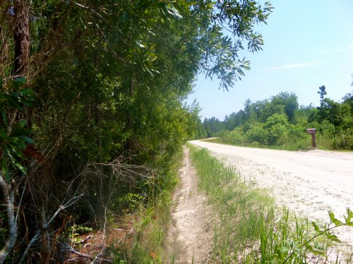 13 Acres Woodland In Southern Wayne : Jesup : Wayne County : Georgia