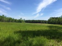 125 Acres Of Pristine Land : Prattville : Autauga County : Alabama