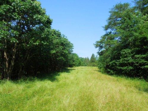 Ponzella Tract : Leasburg : Caswell County : North Carolina