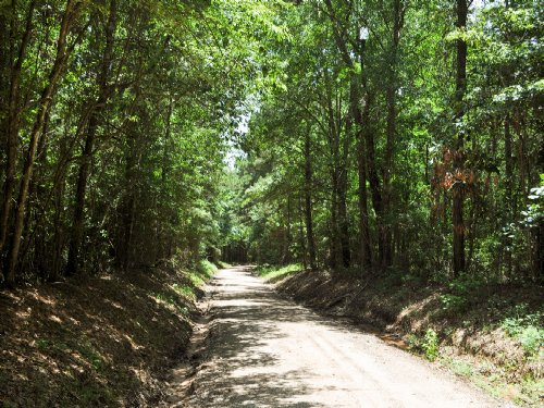 31 Ac Wilderness Rd. : Pointblank : San Jacinto County : Texas