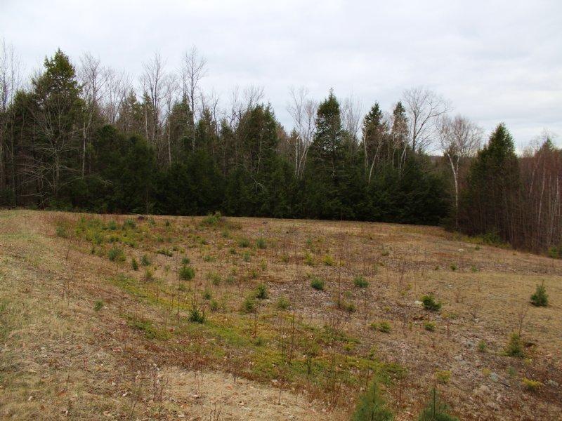 Sandy Pond 45 Acre Kingdom Parcel : Montville : Waldo County : Maine
