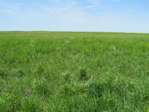 480+/- Acres : Gann Valley : Buffalo County : South Dakota