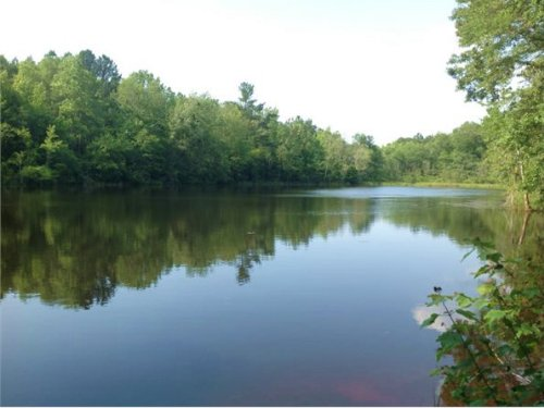 30 Acres In Chesterfield, Sc : Mount Croghan : Chesterfield County : South Carolina
