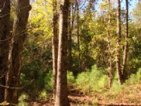 Price Reduced On 35 Acre Homesite : Ellaville : Schley County : Georgia