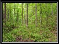 Hidden Woods At Dark Hollow : Jackson : Jackson County : Ohio