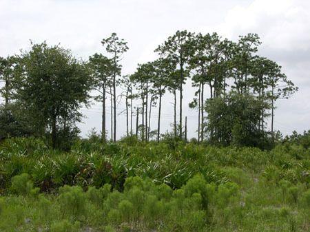 County Line Ranch : Bowling Green : Polk County : Florida
